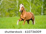 horse in green grass | Shutterstock . vector #610736009