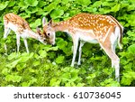 Deer Doe And Deer Fawn In Nature