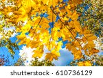 autumn leaves sunlight... | Shutterstock . vector #610736129