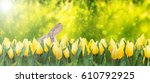 yellow tulips and easter bunny... | Shutterstock . vector #610792925
