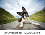 Hiking With A Boston Terrier I...