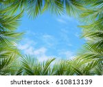 Green Palm Branches As A Frame...