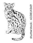 hand drawn vintage illustration ... | Shutterstock .eps vector #610814369