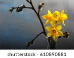 closeup of daffodils and...   Shutterstock . vector #610890881