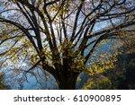 Small photo of tree,nantua,ain, france