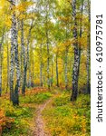 the beauty of the autumn forest.   Shutterstock . vector #610975781