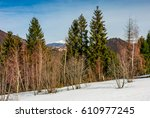 spruce trees on a meadow covered with snow. mountain with snowy peak in the distance. springtime landscape on sunny day under blue sky - stock photo