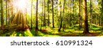 forest with sun | Shutterstock . vector #610991324