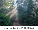 Forest  Fog And Sunlight In Th...