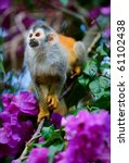 the squirrel monkey and flowers.... | Shutterstock . vector #61102438