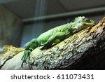resting iguana | Shutterstock . vector #611073431