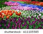 Field Of Multi Colored Tulips...