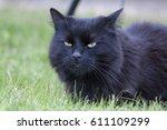 Stock photo cat house cat 611109299