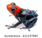 poison dart frog with red head  ...   Shutterstock . vector #611197085