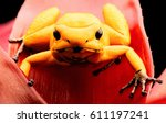 most poisonous poison dart frog ... | Shutterstock . vector #611197241
