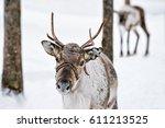 reindeer in winter farm in... | Shutterstock . vector #611213525