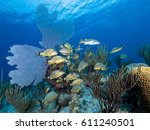 Small photo of French grunts in Caribbean reef scene