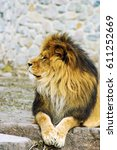 beautiful mighty lion | Shutterstock . vector #611252669