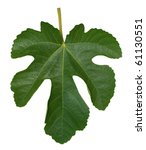 Fig Leaf Isolated On A White...