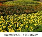 Multicolor Background Flower...