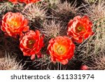 beautiful blooming wild desert... | Shutterstock . vector #611331974