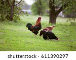 rooster and two hens in green...   Shutterstock . vector #611390297