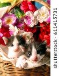 Stock photo kitten in the basket 611415731