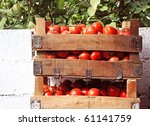 Boxes Of Tomatoes At Outdoor...