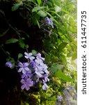 violet flower | Shutterstock . vector #611447735