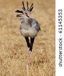 The African Secretary Bird ...