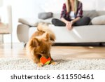 Stock photo portrait of beautiful young woman with her dog playing with ball at home 611550461