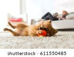 portrait of beautiful young... | Shutterstock . vector #611550485
