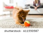 Stock photo portrait of beautiful young woman with her dog playing with ball at home 611550587