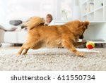 Stock photo portrait of beautiful young woman with her dog playing with ball at home 611550734