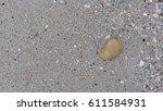 seashell on the sand | Shutterstock . vector #611584931