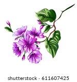 chrysanthemum flower element... | Shutterstock .eps vector #611607425