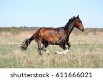 beautiful bay horse running... | Shutterstock . vector #611666021