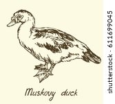 south american muscovy duck ... | Shutterstock .eps vector #611699045