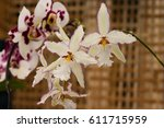 showy white orchids with white... | Shutterstock . vector #611715959