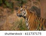 tiger's gesture indochinese...   Shutterstock . vector #611737175