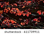 red leaves on black background | Shutterstock . vector #611739911