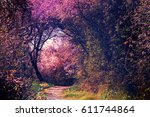 Summer landscape with footpath in magic garden. Nature landscape background - stock photo