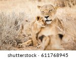 Lioness And Her Cub Cuddling I...