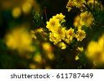 Yellow Flowers                ...