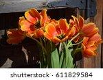 orange and yellow tulips in... | Shutterstock . vector #611829584