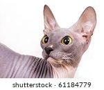cat sphinx | Shutterstock . vector #61184779