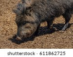 american pigs peccaries in the... | Shutterstock . vector #611862725