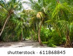 palm leaves.tropical forest on...   Shutterstock . vector #611868845