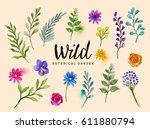 isolated wild botanical plants  ...   Shutterstock .eps vector #611880794