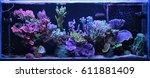 Dream Coral Reef Aquarium Tank